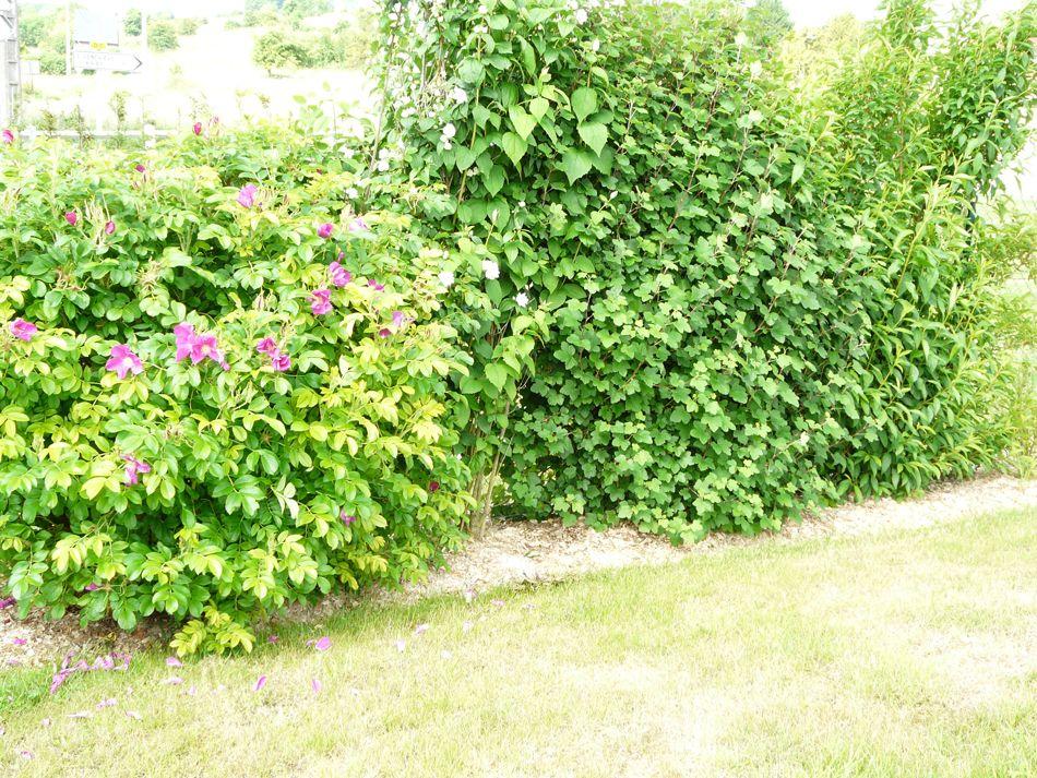 Paillage jardin vente en ligne de paillage naturel pour for Boutique dans un jardin en ligne